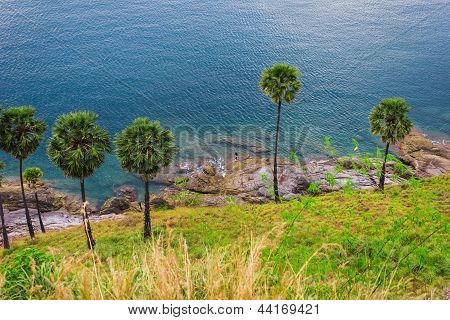 Palm Trees On The Beach On The Island Of Phuket