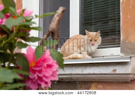 A Red Cat On An Old Window With Flowers