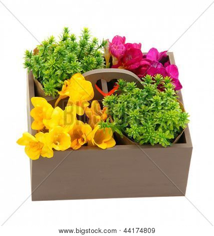 Beautiful flowers arranged in wooden box isolated on white