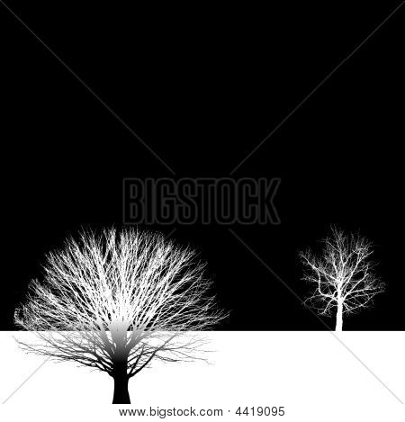 Bare Tree Background