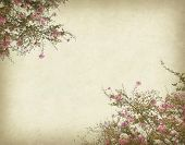 image of crepe myrtle  - crepe myrtle flowers with old grunge antique paper texture - JPG