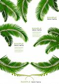 stock photo of jungle exotic  - Set of backgrounds with palm leaves - JPG