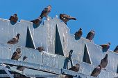 stock photo of feces  - lot of pigeons on a wooden structure - JPG