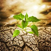 stock photo of smog  - green sprout from dead soil - JPG