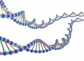 image of double helix  - 3D Render of DNA in white background - JPG