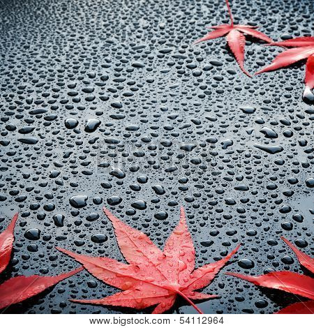 Water drops on polished black car paint with red leafs