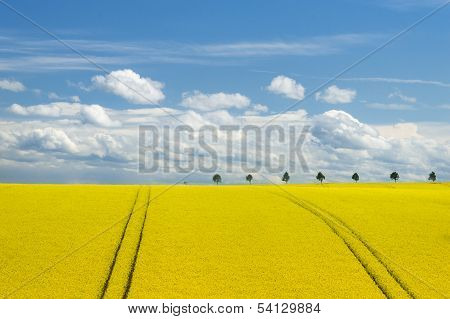 Canola Field And Romantic Sky