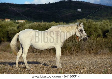 White Horse In Countryside