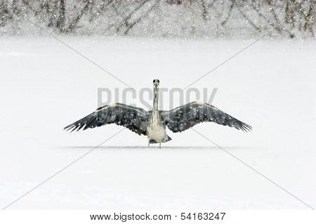 Landing on ice.