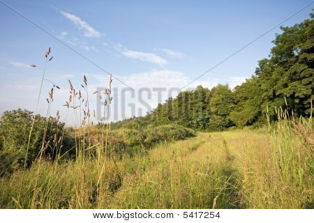 Tracks Running Through Long Grass With Trees And Blue Sky