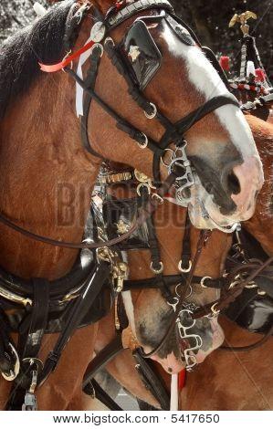 Cerca de caballos
