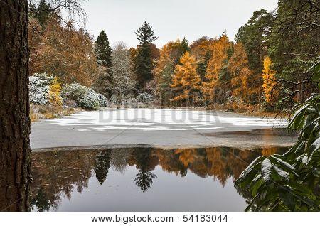 Scotland, water garden in November