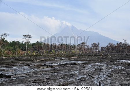 Area flattened, burned forest and active volcano mount merapi as background
