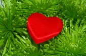 Red Heart And Green Leaves