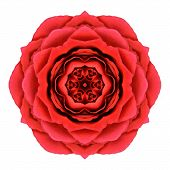 stock photo of kaleidoscope  - Red Rose Mandala Flower Kaleidoscopic Isolated on White Background - JPG