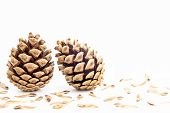 pic of spores  - Two pine cone with seeds spores on white background - JPG