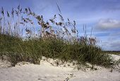 stock photo of sea oats  - Sea oats sway in the sea - JPG