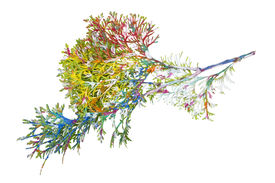 foto of psychodelic  - The abstract Christmas branch is painted in psychodelic colors - JPG