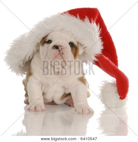 Bulldog Puppy Santa