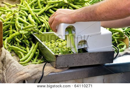 Ecological Lima Beans.