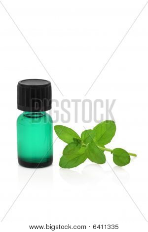 Peppermint Herb Leaf and Essence