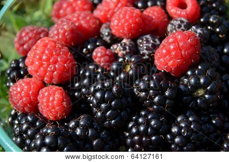 Black berries and Raspberries