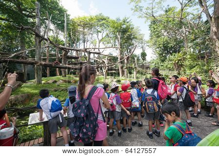 SINGAPORE - NOVEMBER 07, 2012: Group of elementary school children with teachers on excursions to Singapore Zoo. Singapore Zoo is very popular among tourists and residents of Singapore.