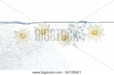 Flowers And Water