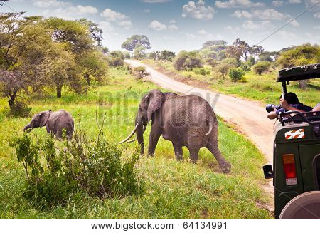 Elephants family on pasture in African savanna . Tanzania, Africa.