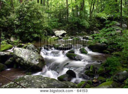 Lush Mountain Stream