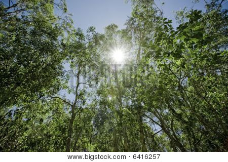 Green Vibrant Forest With Sun Shining Through The Leaves