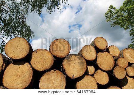 Heap Of Cut Wood Trunk In Forest