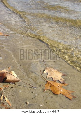 Autumn Shore (nice Detail)