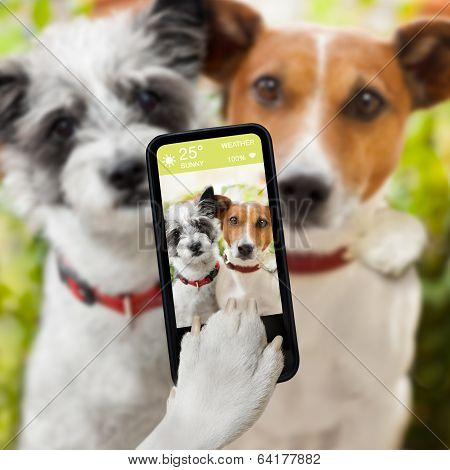 Selfie Dogs poster