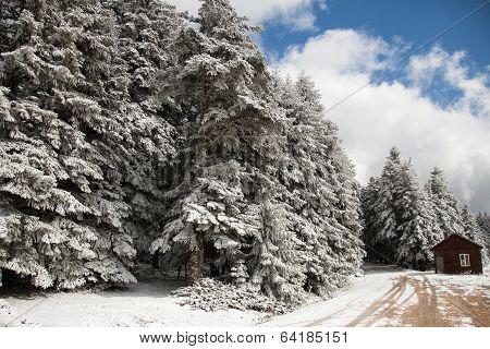 winter in the Bolu mountains, Turkey