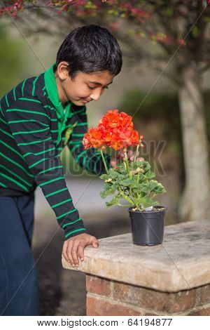 Little Boy Admiring Geranium Flowers in Spring