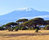 image of kilimanjaro  - Amboseli National Park and Mount Kilimanjaro in Kenya - JPG