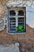 image of ivy vine  - Green ivy leaves growing through broken rusty window of abandoned house - JPG