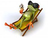 pic of amazonian frog  - Frog - JPG