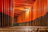 pic of inari  - Fushimi Inari Taisha Shrine torii gates in Kyoto - JPG