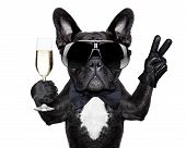 image of champagne glass  - french bulldog with a champagne glass and victory or peace fingers - JPG