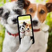 stock photo of lovers  - couple of dog taking a selfie together with a smartphone - JPG