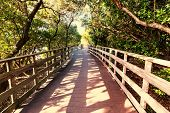 foto of swamps  - Boardwalk in swamp - JPG