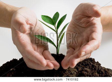 Planta em uma mão