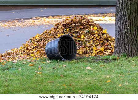 Pile Of Leaves And Basket