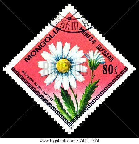 Vintage  Postage Stamp. The Flowerses Leucanthemum Sibiricum.