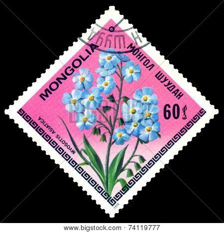 Vintage  Postage Stamp. The Flowerses Myosotis Asiatica.