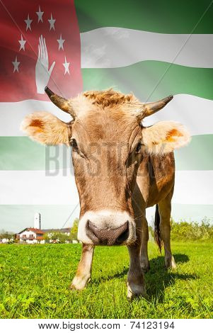 Cow With Flag On Background Series - Abkhazia