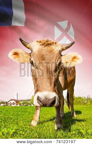 Cow With Flag On Background Series - Territory Of The Wallis And Futuna Islands