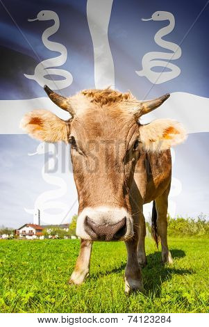 Cow With Flag On Background Series - Martinique